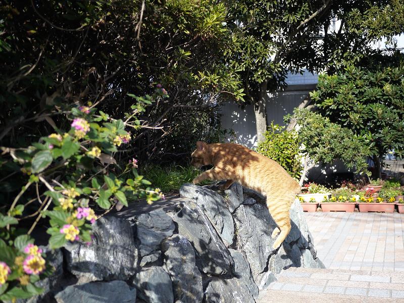 茂みに向かってジャンプするネコ