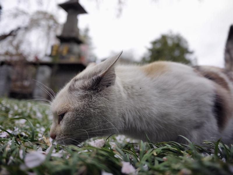 春の匂いを夢中になって1