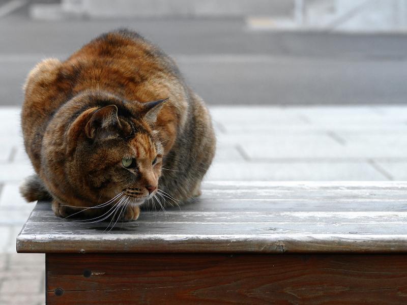 ベンチの上で下を見ている猫