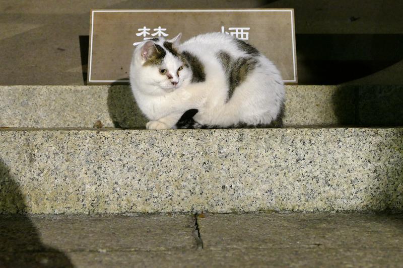 階段と白キジ猫