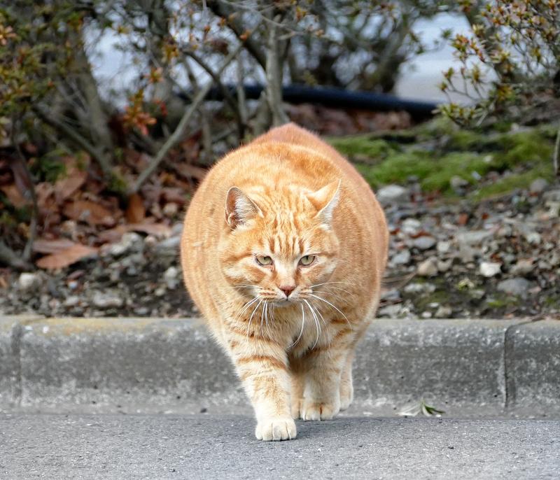 でかすぎる猫1