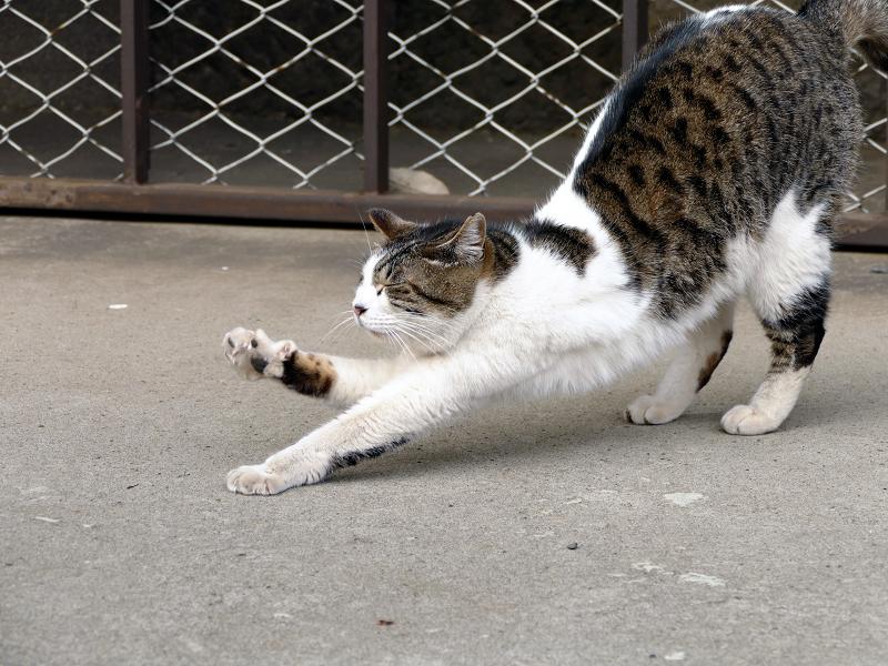 金網の前で伸びをする猫