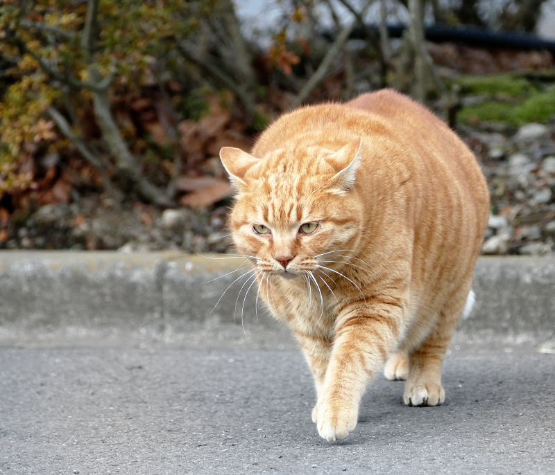 でかすぎる猫2