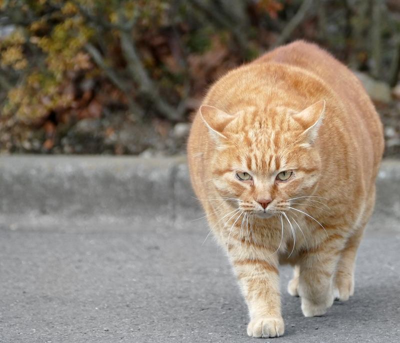 でかすぎる猫3