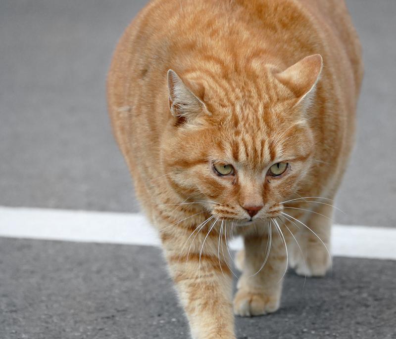 でかすぎる猫5