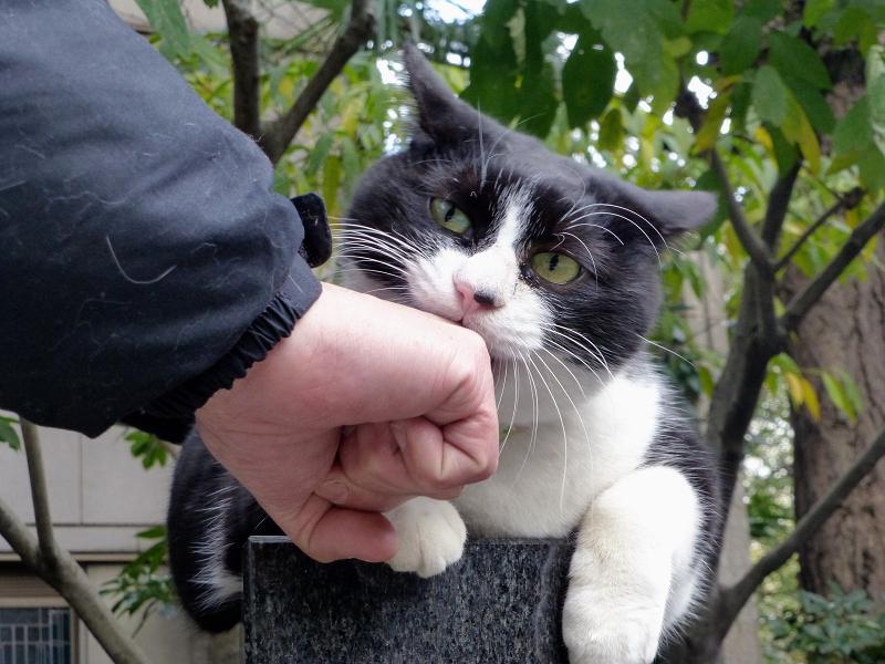 私の手を噛む猫