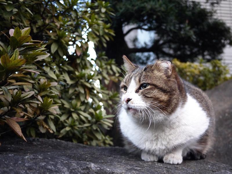 岩の上で佇む猫