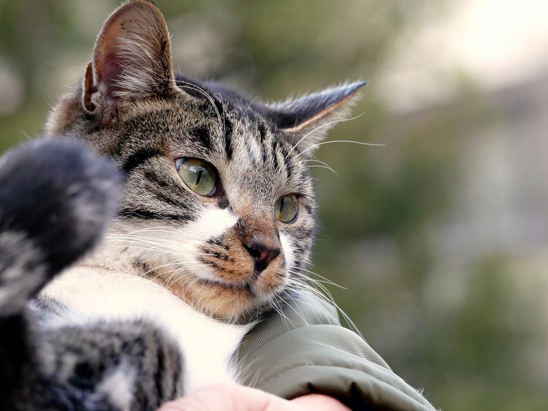 腕の中で抱かれる猫