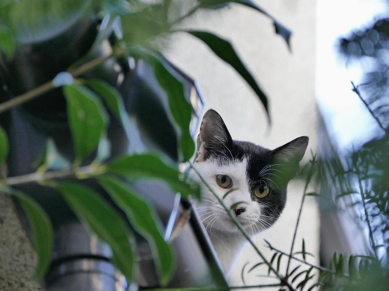 不安そうに見る猫