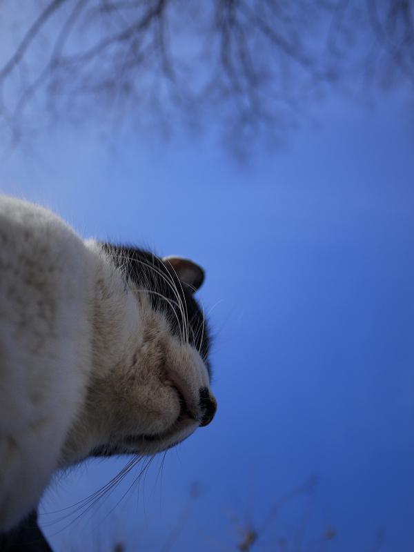 蒼天とネコ
