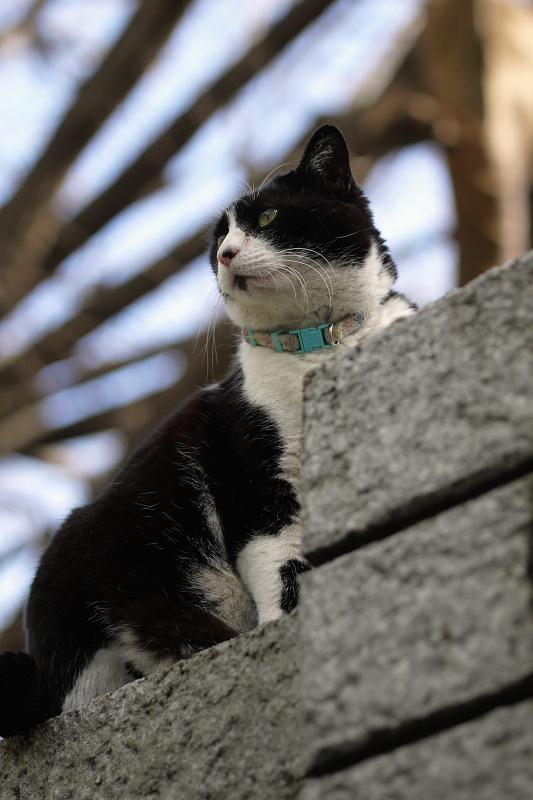石垣と猫1