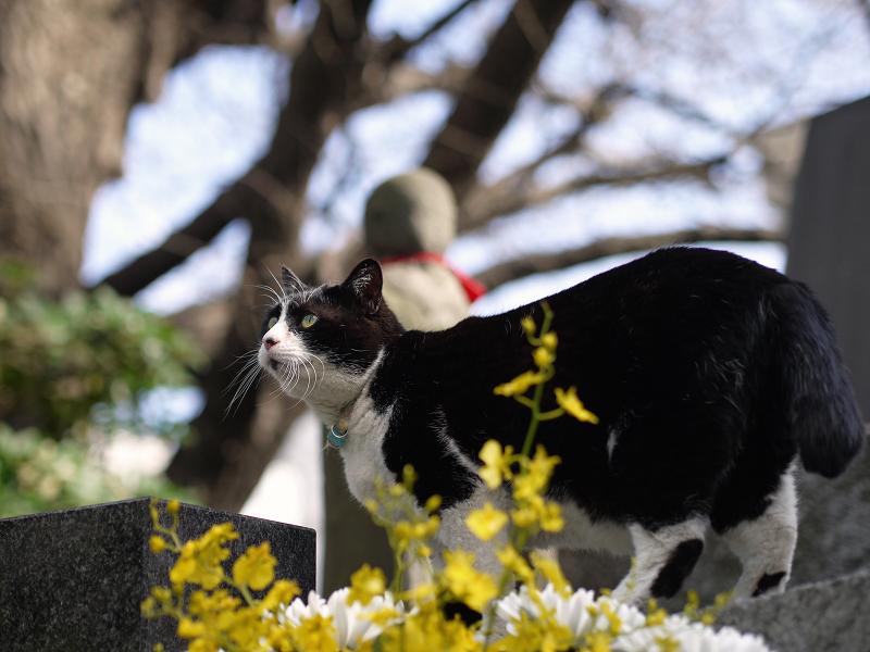 お地蔵さんと猫1