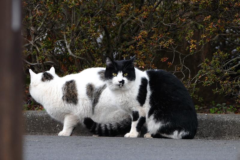 大人になった仔猫たち