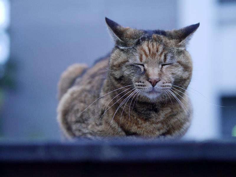 ベンチとサビ柄猫