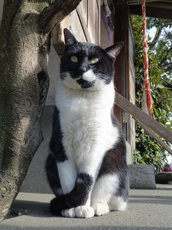 見上げる黒白猫