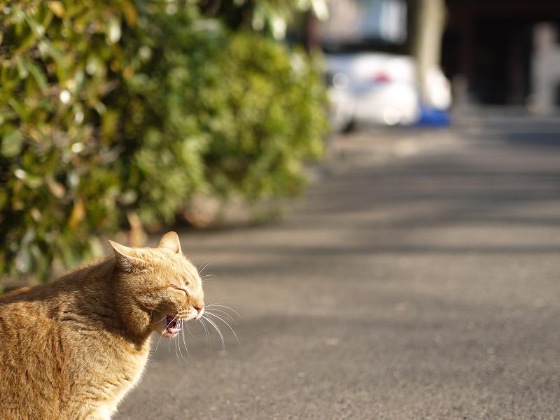 うららかにあくびをする猫