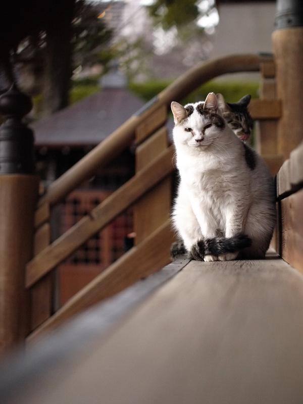 階段に並ぶ若猫2匹