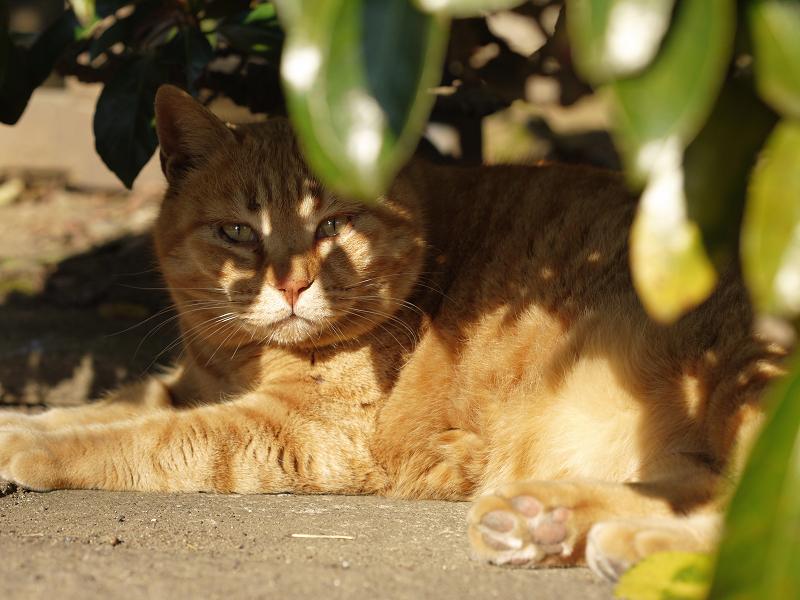 茂みの影が顔に差してる猫