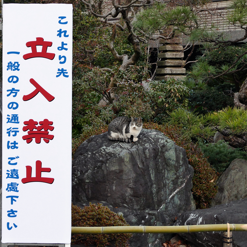 立ち入り禁止の猫