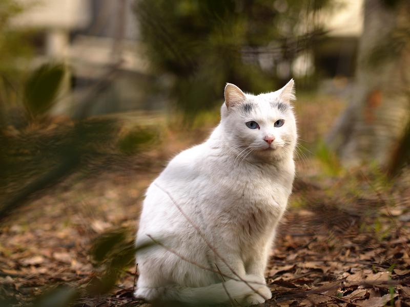 植え込みの奥にいた猫