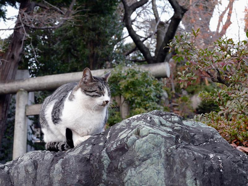 サバ白ネコと鳥居