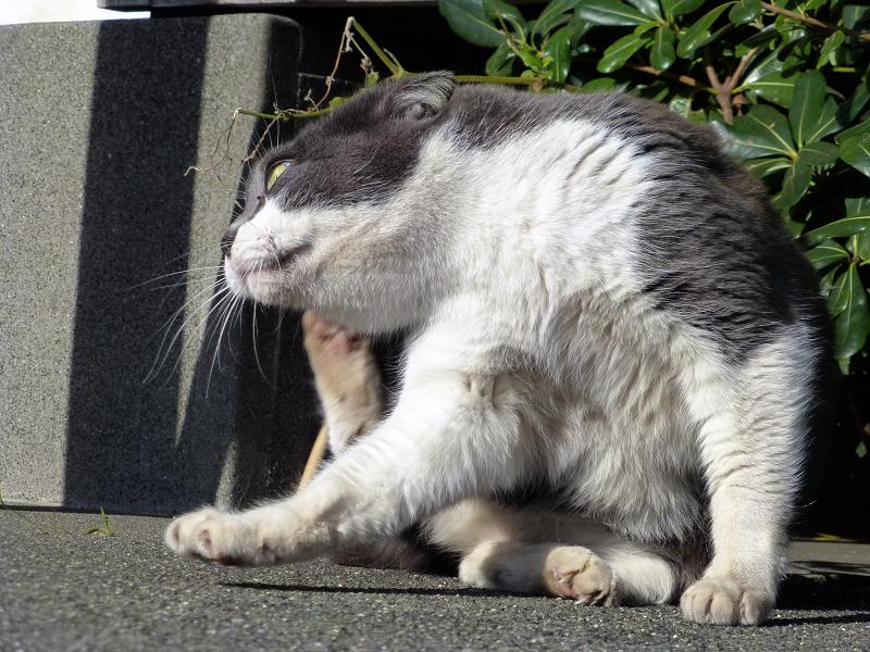 カキカキグレー白ネコ3