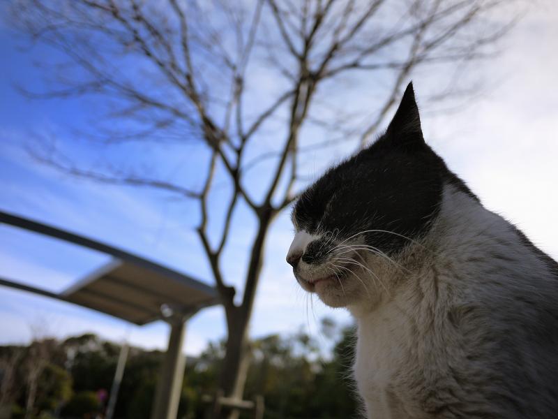 冬空に耳を立てるネコ