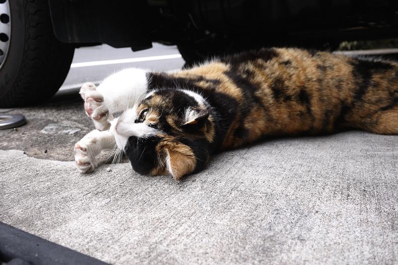 車の下で伸びをしてる猫