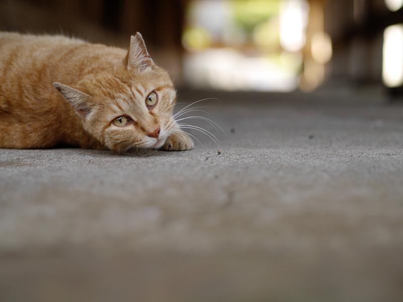 濡れ縁の下で振り返る猫