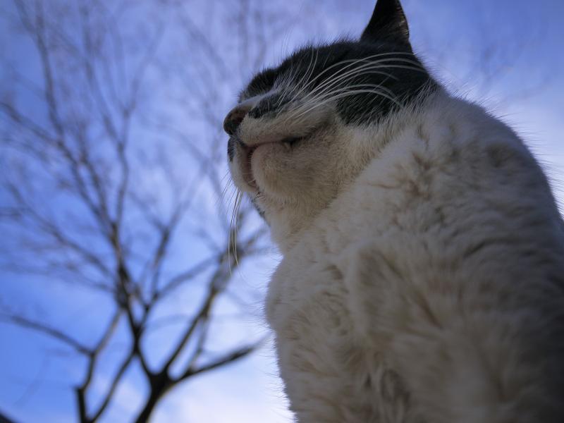 冬空に聳え立つようなネコ