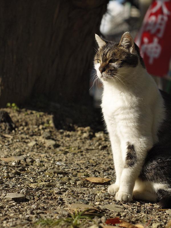 大明神と猫