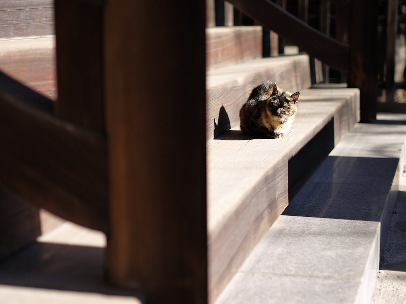 階段と日差しとサビ猫1