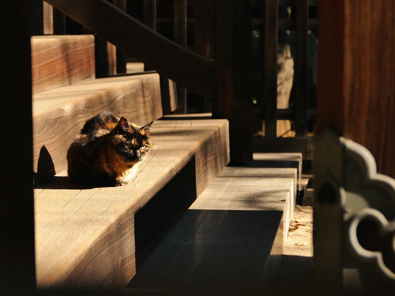 階段と日差しとサビ猫2