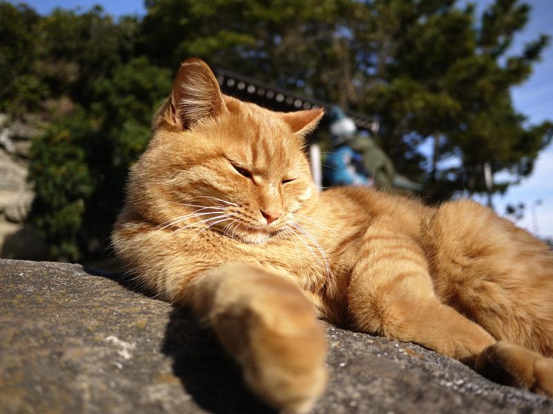 冬陽射しの中で目覚めたネコ
