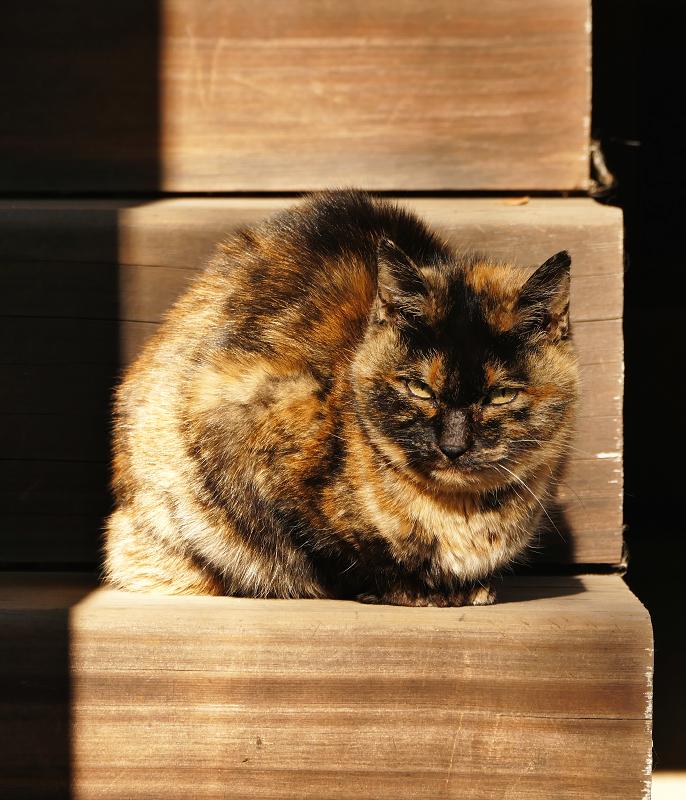階段と日差しとサビ猫3