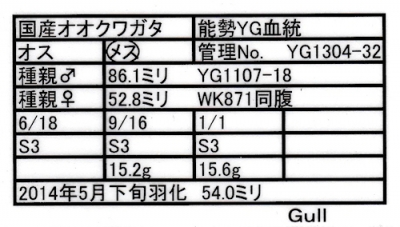13Gull-4.jpg