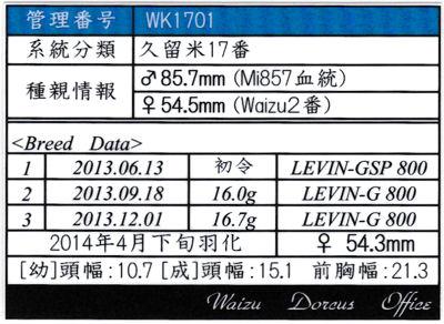 Waizu久留米17番♀543