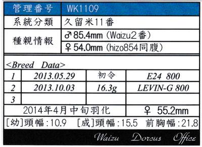Waizu久留米11番♀552