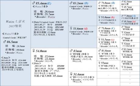 Waizu久留米865血統構成表1200