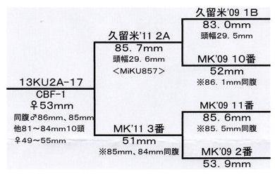 Mi久留米2Aライン♀530(コラボ)