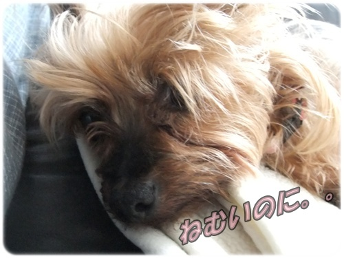 2015_0622モコの毛が・・0002