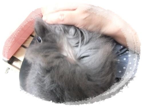 2015_0622モコの毛が・・0036