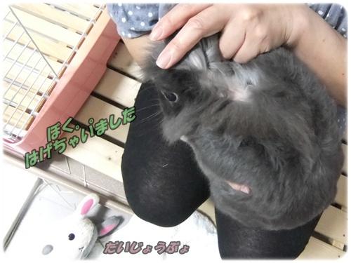 2015_0622モコの毛が・・0038