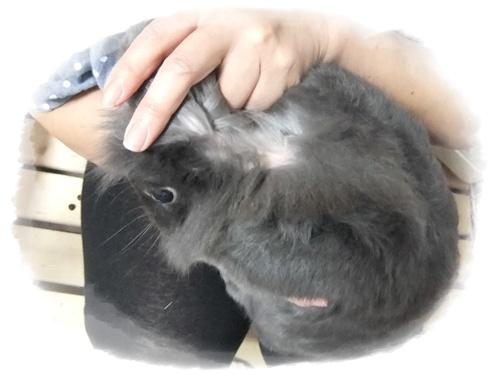 2015_0622モコの毛が・・0040