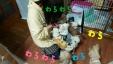 2015-04-09-23-53-39_deco.jpg
