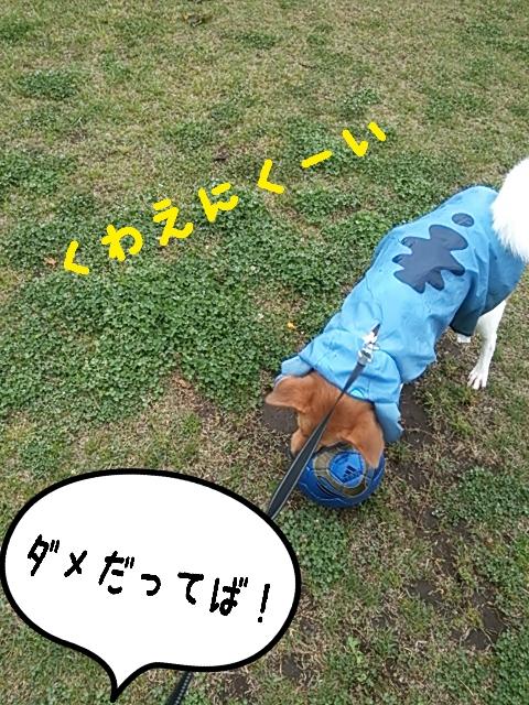 2015-04-20-13-55-01_deco.jpg