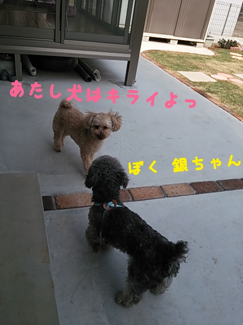 2015-05-15-13-37-33_deco.jpg