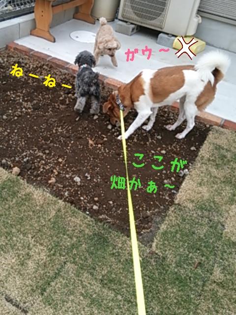 2015-05-15-14-01-36_deco.jpg