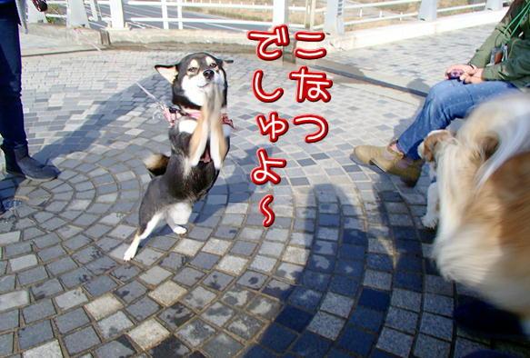 5_20150303142347b1f.jpg