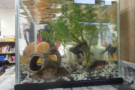 新居に移った金魚
